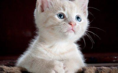 Quelles dispositions prendre avant d'adopter un animal ?