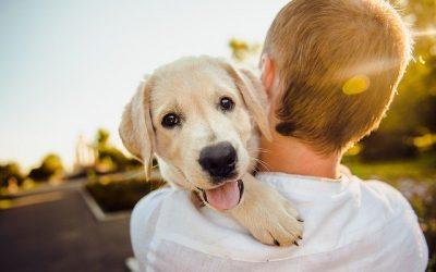 Comment se préparer à l'adoption d'un chien ?