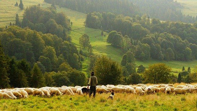 Quels sont les prérequis de l'élevage?