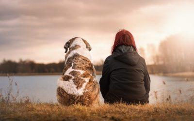 Comment passer un bon moment avec votre animal de compagnie ?
