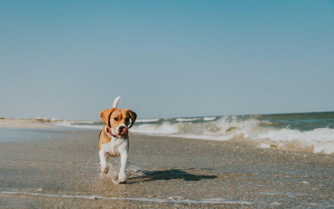 Comment lutter naturellement contre le stress canin ?