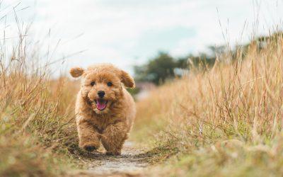 Comment soulager votre chien après l'annonce d'une maladie ?