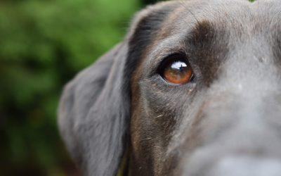 Eviter que son chien se sauve, comment réussir ?