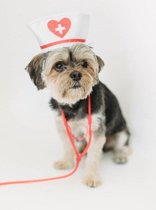 Commencer assurer le bien-être de votre chien?